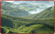 Munnar Hill Station Packages